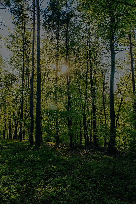 US leather industry joins forces with WWF to fight deforestation and promote best practice